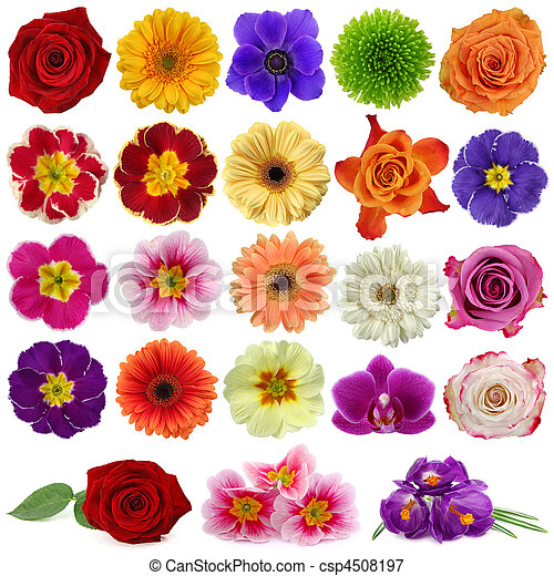 Flower collection - csp4508197