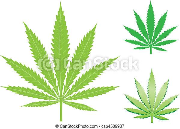 hemp leaf - csp4509937