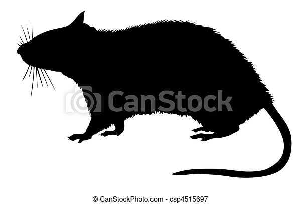 silhouette of the rat on white background  - csp4515697