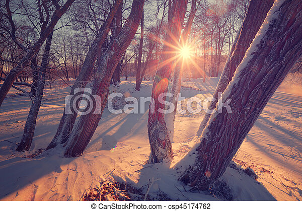 Sun shite trough tree. Winter landscape with sun beams and lens flare. Colorful winter background.