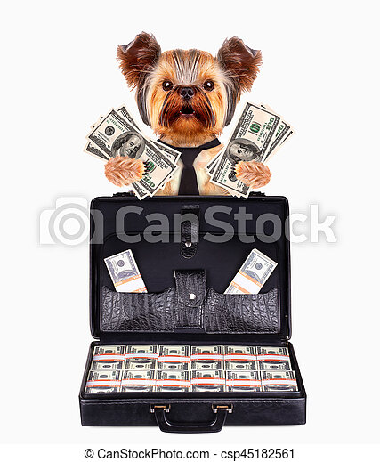 Funny dogs behind briefcase with many bundles of money. Business concept.