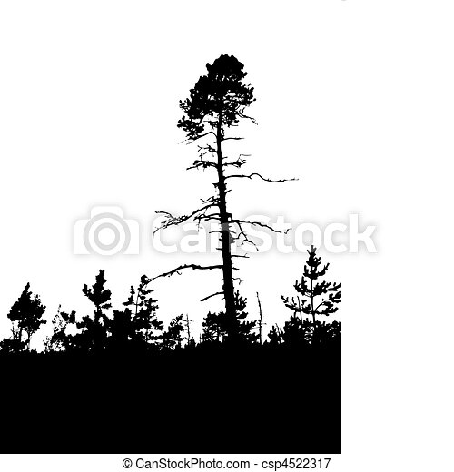 vector silhouette old pine wood on white background - csp4522317