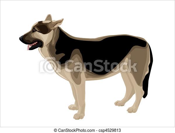 Alsatian shepherd - csp4529813