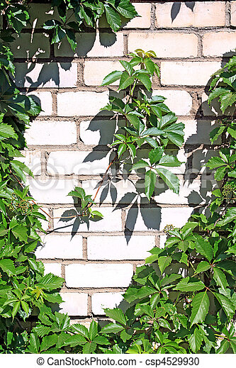 photographies de plante brique mur csp4529930. Black Bedroom Furniture Sets. Home Design Ideas
