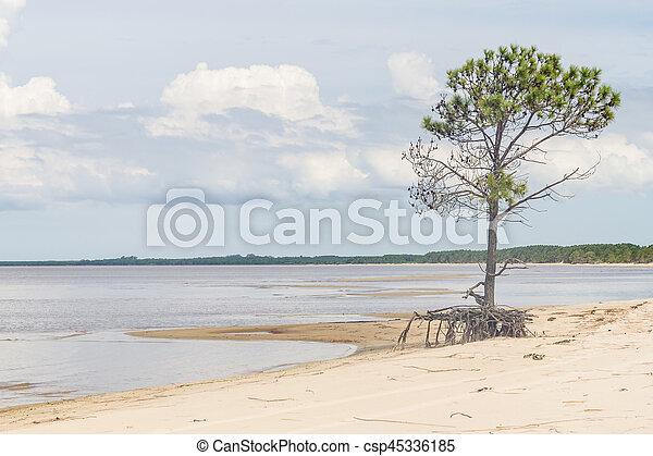 Lagoa dos Patos lake and vegetation - csp45336185