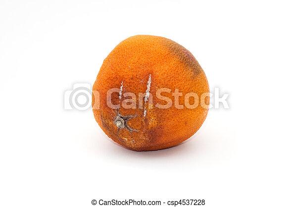 橘子皮粘贴画作品