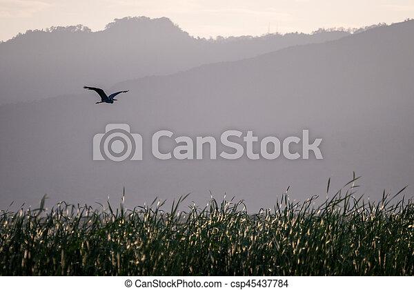 Flying bird over reeds of Jipe Lake, Tsavo West National Park, Kenya