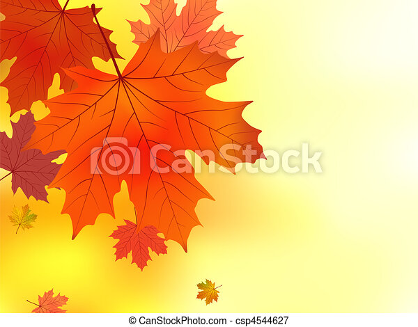 Red and yellow leaves of a maple. - csp4544627