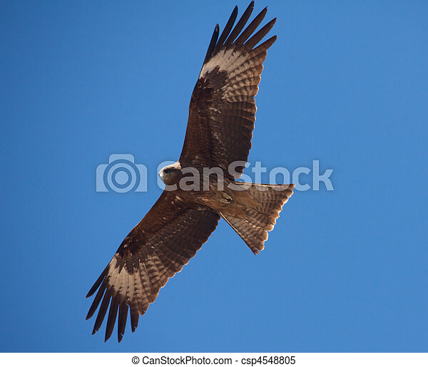 Predatory bird - csp4548805