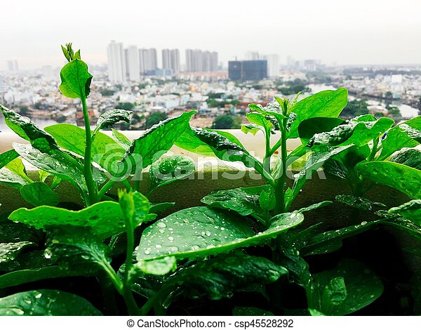 Vegetables mini garden farm on rooftop in urban city - csp45528292