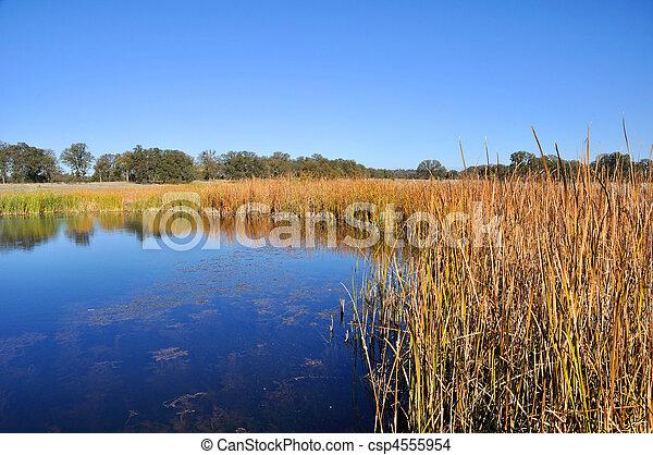 California Wetland  - csp4555954