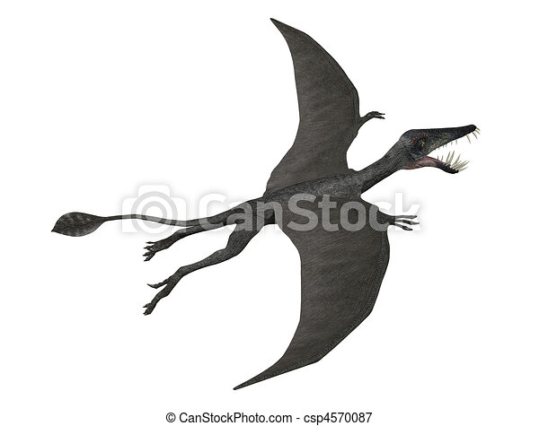 Dorygnathus in flight - csp4570087