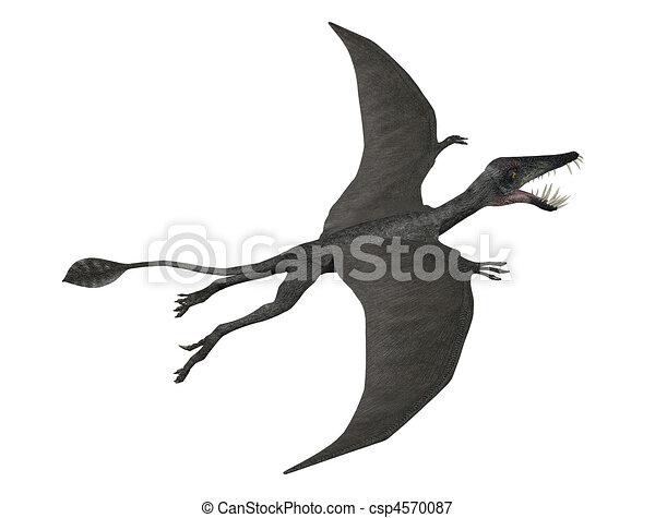 Dorygnathus in flight - csp4570087