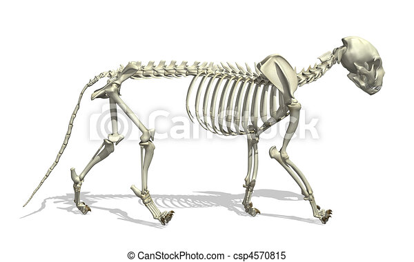 Cat Skeleton - csp4570815