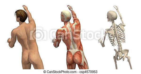 Anatomical Overlays - Turning and Reaching - csp4570953