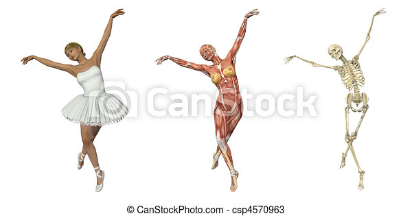 Anatomical Overlays - Ballet - csp4570963