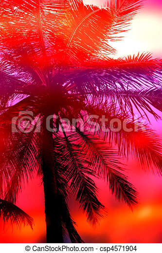 Palm Tree Sunset - csp4571904