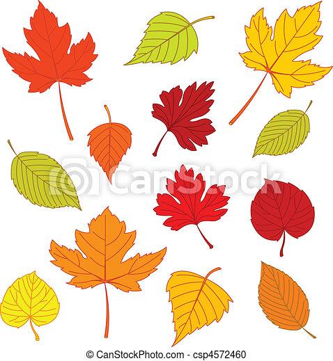 Clipart vecteur de automne feuilles blanc illustration de diff rent csp4572460 - Feuille automne dessin ...