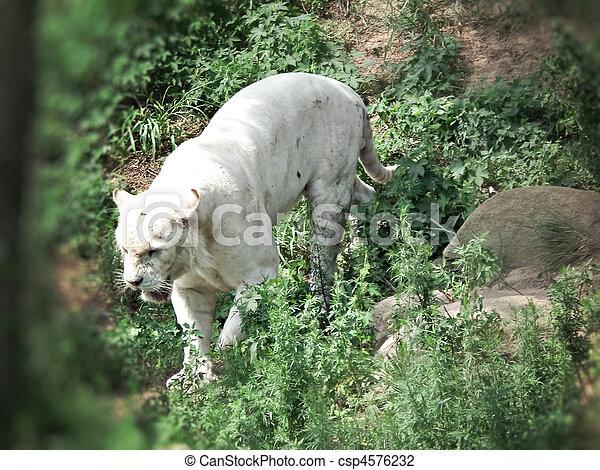 white panther - csp4576232