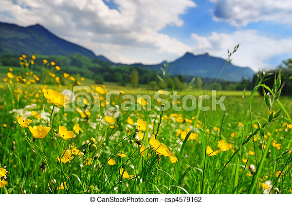 Grass and flowers in the Alpine meadow - csp4579162