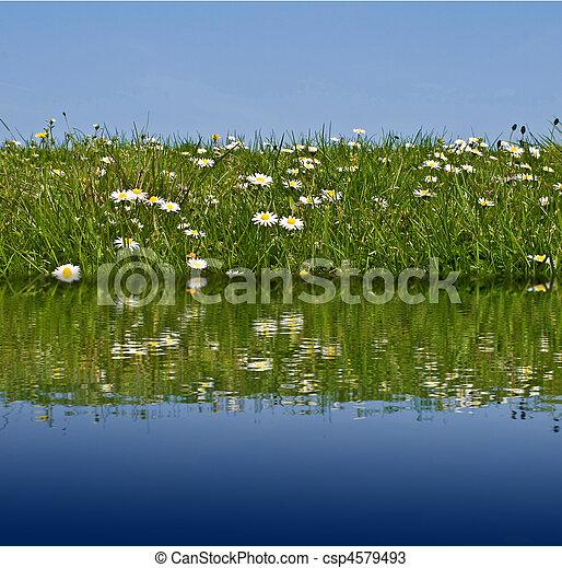 Meadow water - csp4579493