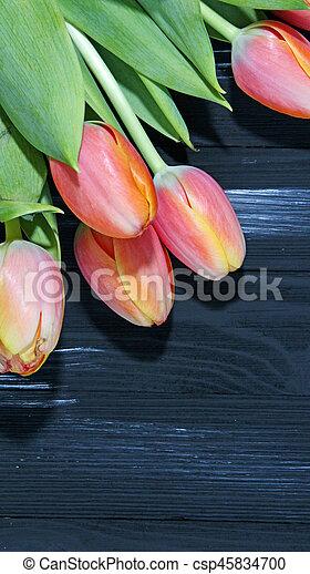 Orange Tulips - csp45834700