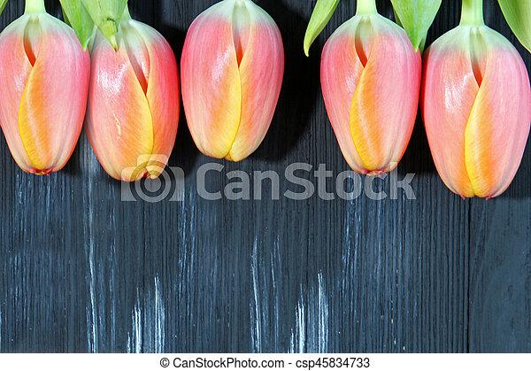 A bunch of orange Tulips - csp45834733