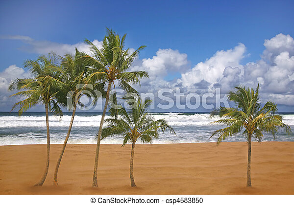 Beautiful Travel Destination Beach Image - csp4583850
