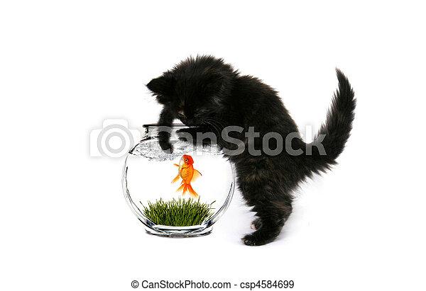 Fishing Kitty - csp4584699