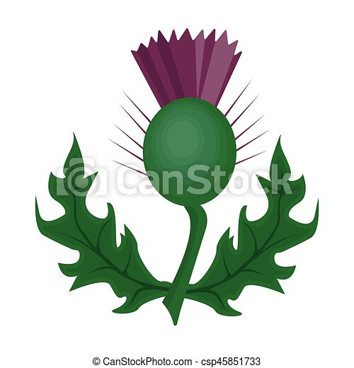 Thistles with green leaves.Medicinal plant of Scotland.Scotland single icon in cartoon style vector symbol stock illustration. - csp45851733