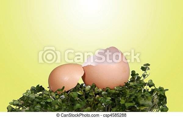 Open Cracked Egg Fantasy Photo Background for Digital Manipulation - csp4585288