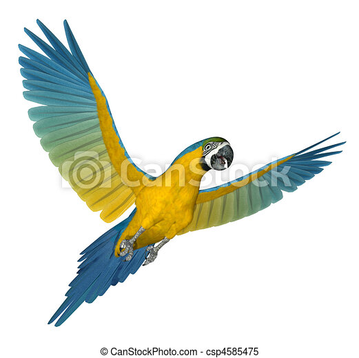 Blue Macaw Drawing Blue and Gold Macaw Flying 2