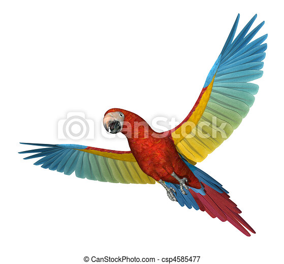 Flying Macaw Coloring Page Macaw Flying by Anangelicday