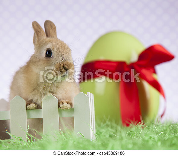 Bunny, rabbit and easter eggs - csp45869186