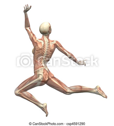 Anatomy in Motion - Woman Leaping - csp4591290