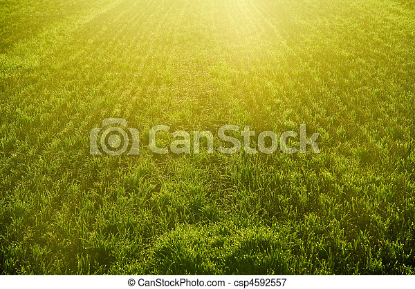 Field Crops Clipart Sunrise Over Crop Field Detail