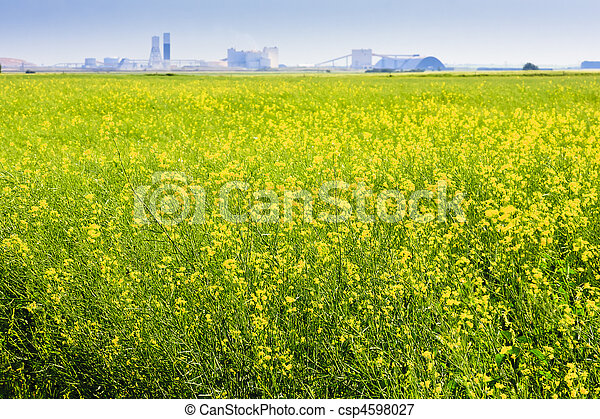 Canola Field on the Prairies - csp4598027