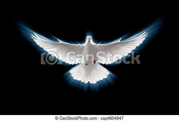 flying dove - csp4604947
