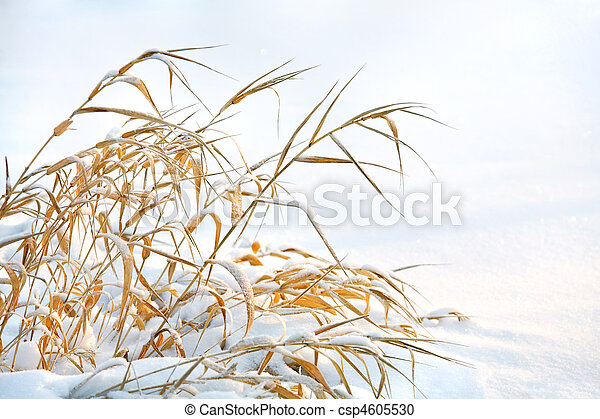 Grass is frozen - csp4605530