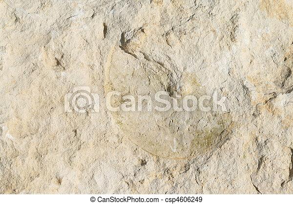 Limestone rock - csp4606249