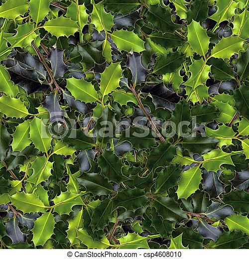 Stock de fotograf a de acebo hojas imagen acebo hojas for Ver fotos de arboles de hoja perenne