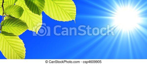 藍色, 天空, 葉子 - csp4609905