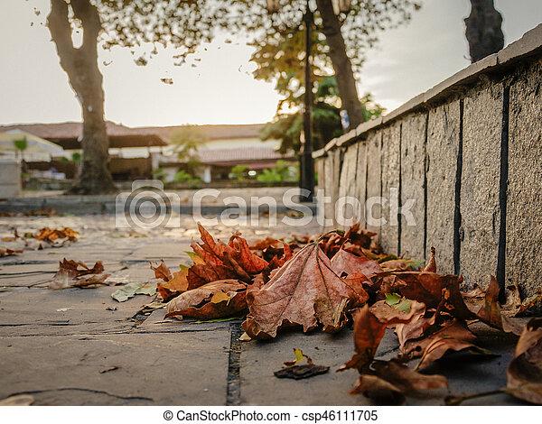 yellow autumn leaves - csp46111705