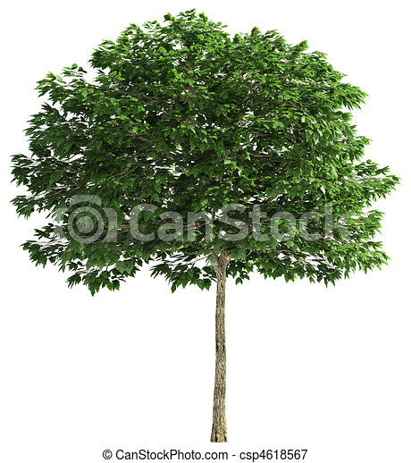 Tree isolated on white - csp4618567