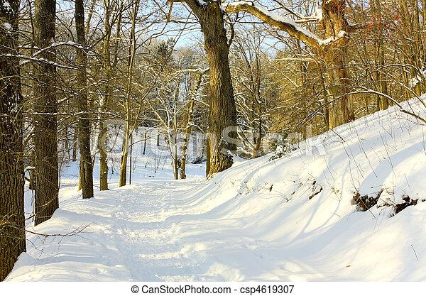 Winter path - csp4619307
