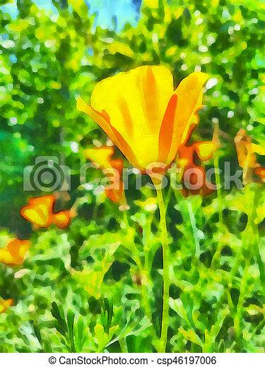 California Poppies - csp46197006