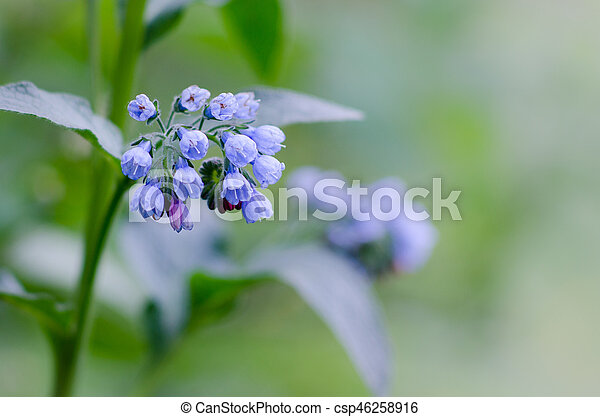 blue forest flowers on blurred background - csp46258916
