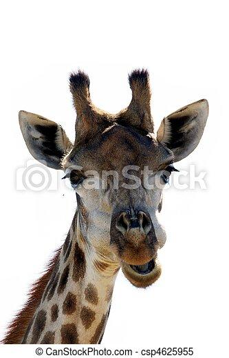 girafe, rigolote, figure - csp4625955
