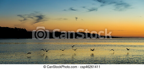 Sun Down Flight - csp46261411