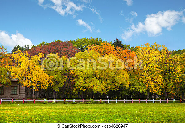 Autumn trees over the blue sky  - csp4626947